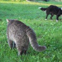 Кот и Пёс :: Катерина Пестовская