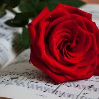 Ноты любви :: Светлана