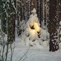 Луч солнца проник сквозь чащу зимнего леса :: Валерий Струк