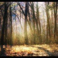 Весенний свет :: Максим Минаков