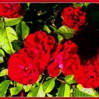 Красные цветы. :: Александр Лейкум
