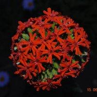 цветок :: Юля Кривоносова