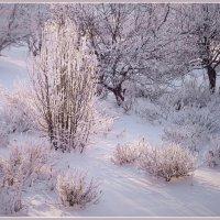 Зимний рассвет :: Olenka