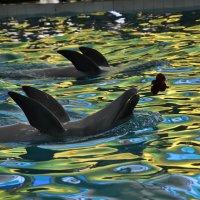 Дельфин и гвоздика :: Анастасия = )