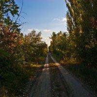 Дорогу осилит идущий :: Александр Лиманский