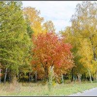 Вспоминая осень :: ЛЮБОВЬ ВОЛГИНА