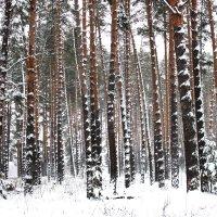 Зимний лес :: Irene Farkh