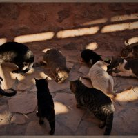 ...монастырские кошки.. :: Елена Михайловна