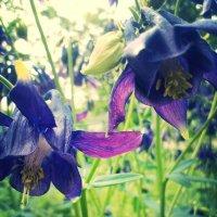 цветы :: Аленушка Ерош