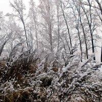 Узоры первого снегопада :: Светлана Игнатьева