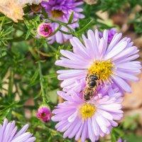 Пчелиная работа :: Елена Ладанюк