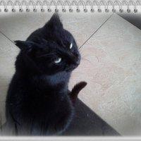 Котик :: ~ DIMA ~