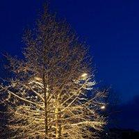 Ночь, улица, фонарь.... :: Anna Gubina