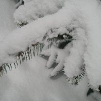 Первый снег :: Марина Гимбург