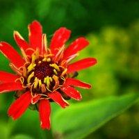 Последние цветы лета :: юрий Амосов