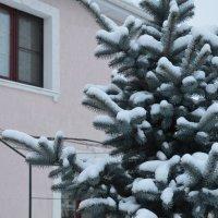 Пришла зима :: Наталья Шкуропатова