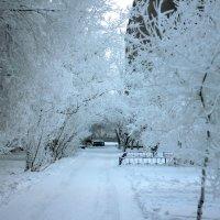 зима :: Александр Белянин