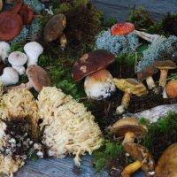 Натюрморт с грибами. :: Харис Шахмаметьев