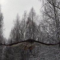 охота :: Игорь Казаковцев