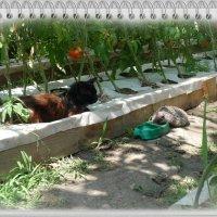 Дружба животных :: ~ DIMA ~