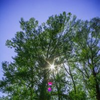 Дерево! :: Азат Байтилеев