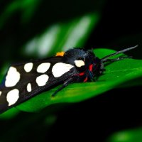 ночная бабочка :: Вадим Карповский