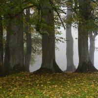 Trees in the fog :: Дмитрий Каминский