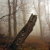 Осенний крымский лес :: Михаил Баевский
