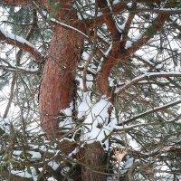 Лесные тайны :: Мария Т