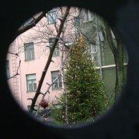 Дворовая ёлочка. Хельсинки :: Марина Домосилецкая