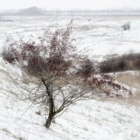 Зима, начало. :: Vit