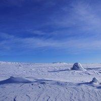 В снежной пустыне... :: Artyom S