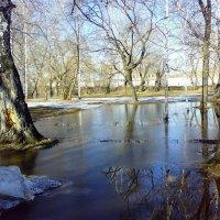 Весна в парке :: Ольга Чазова