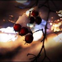 ягоды в снегу :: Irina Dmir