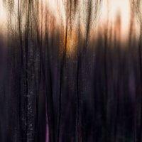 sunset in the forest herbs :: Слава Ольшевская