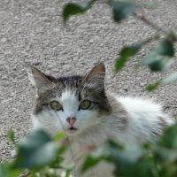 Любопытная кошка :: Екатерина