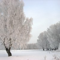 Зимушка-зима :: Геннадий Ячменев