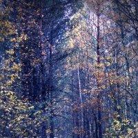 В лесу :: Alina_ Mash