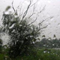 внезапный дождь :: Геннадий Авденко