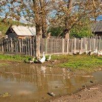 жили у бабуси много всяких гусей... :: зоя полянская