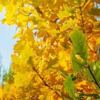 Осень :: Galiya T.