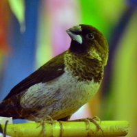 Просто птичка. :: Виталий Дарханов