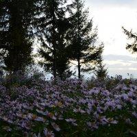 цветы :: Анастасия Якушева