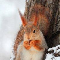 А орешки то не простые :: Дмитрий Сушкин