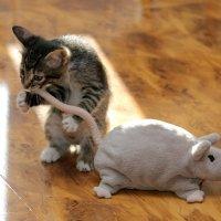 Ем крысу с хвоста :: Игорь Герман