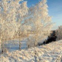 На зимнем берегу :: Владимир Зыбин