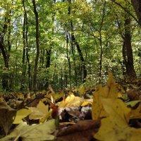 Осень в лесу :: Yarik Minakin