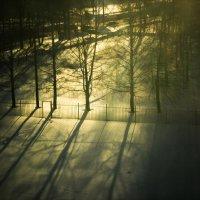 Зимнее утро :: Мария Макарова