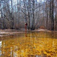 золотая лужа :: Борис Иванов