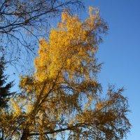 Осень :: Евгений Галкин